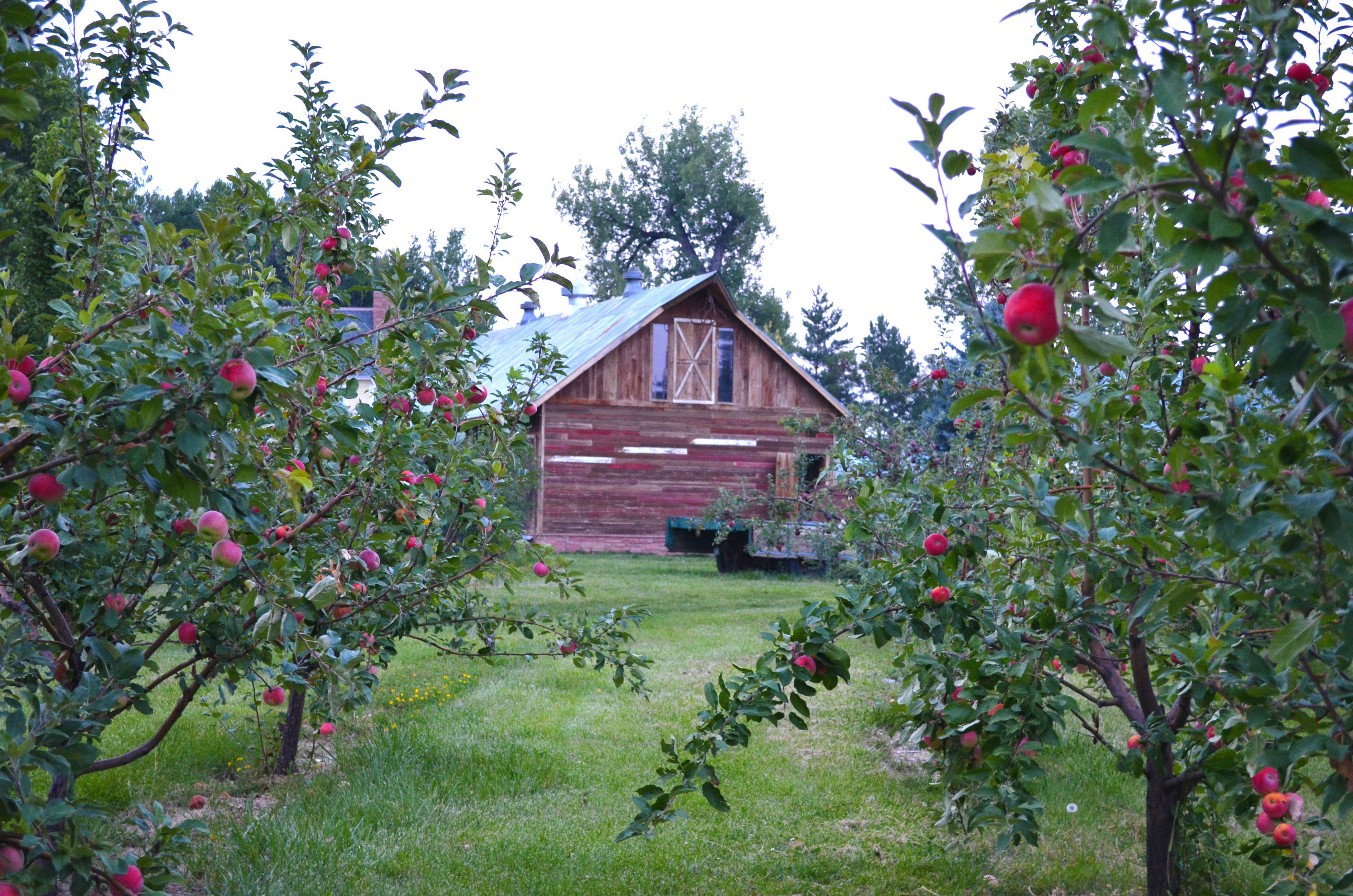 The Best Places To Go Apple Picking In The U S And Where To Stay