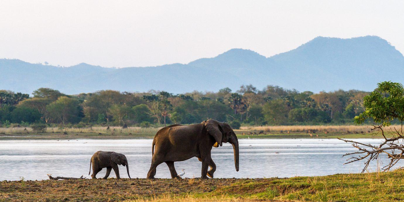 Elephants walking in Malawi