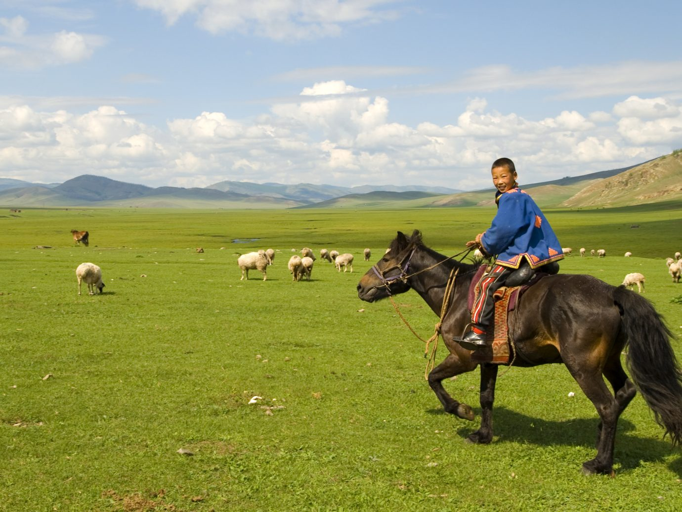 Mongolian boy herding his flock of sheep/goats.
