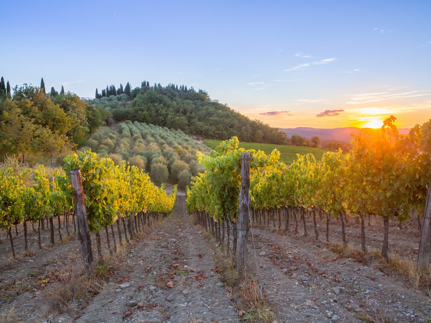 Last rays of sun over vineyards and olive trees in the Chianti region, Tuscany, Italy.