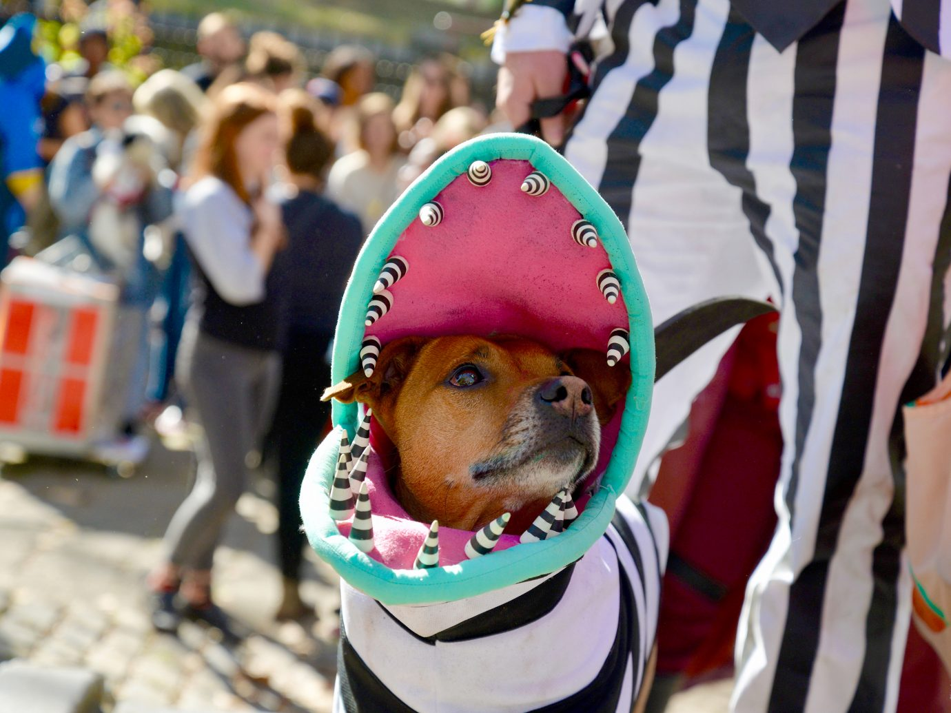 dog in beetlejuice monster halloween costume