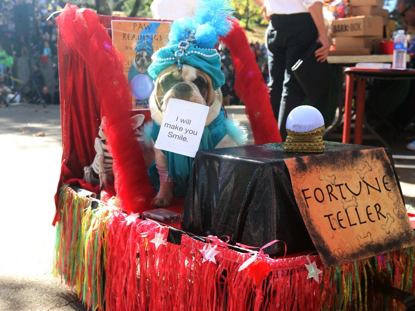 dog in fortune teller halloween costume