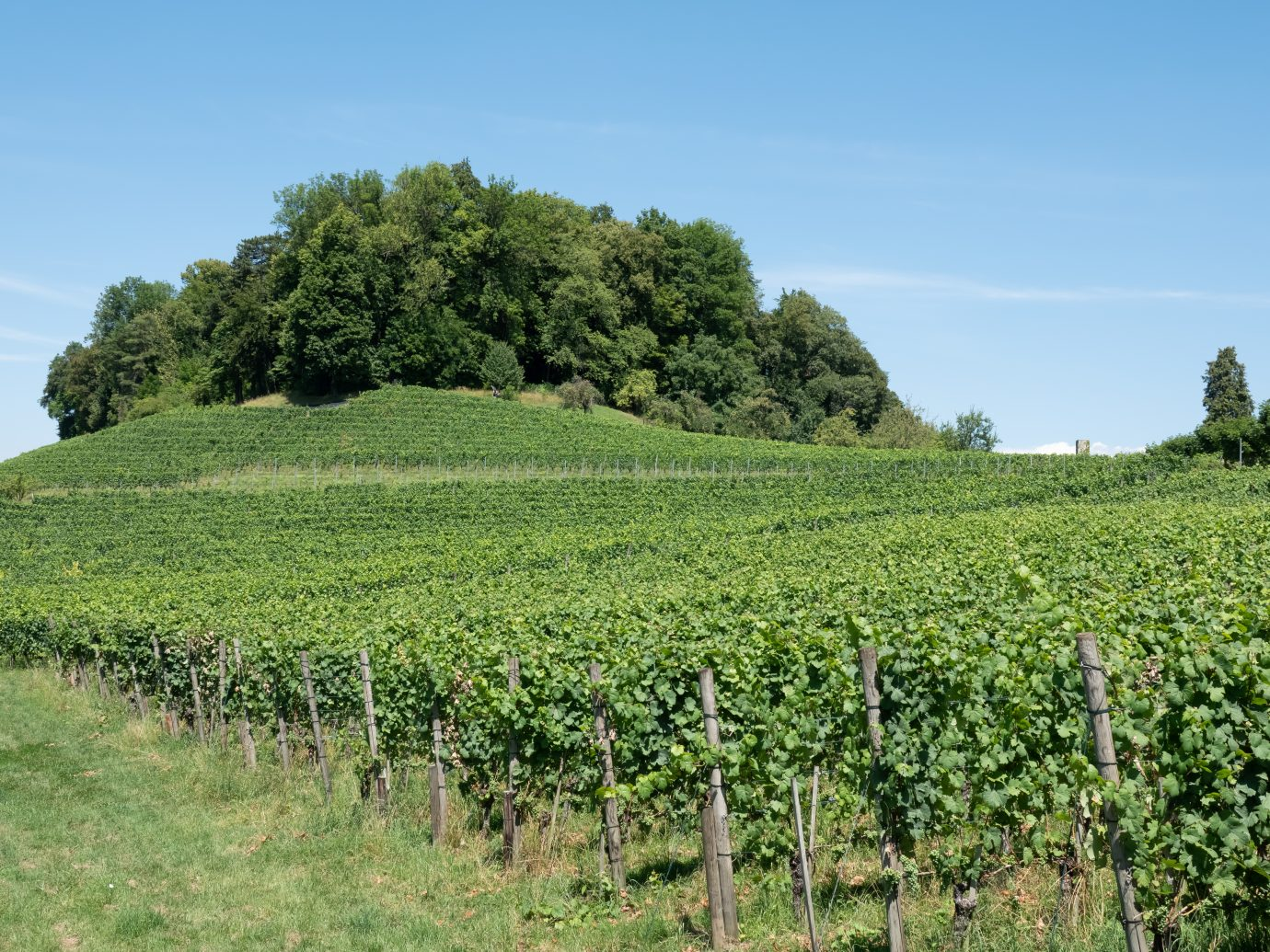 Hiking in the wine terraces of the Weinland region of the city of Zurich, Switzerland