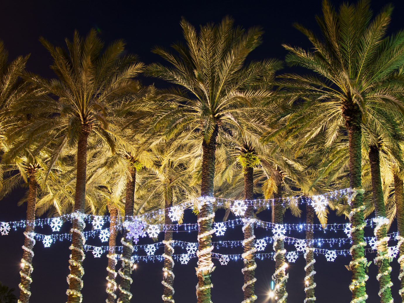 Christmas holiday illumination on palm trees in Florida.