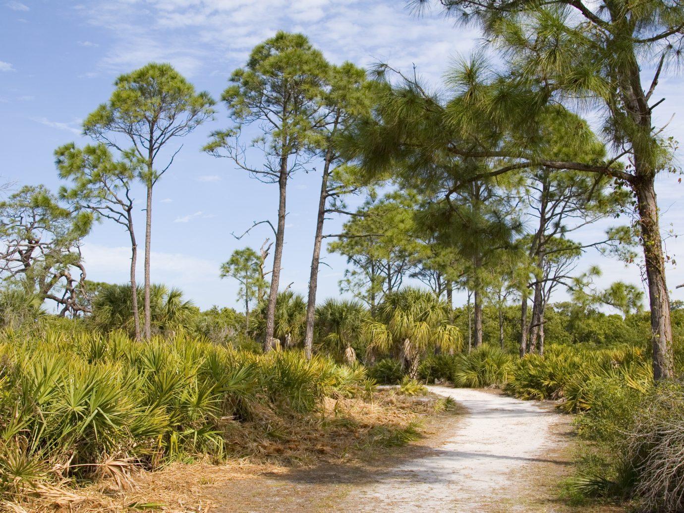 Caladesi Island, a natural beauty on Florida's Gulf Coast