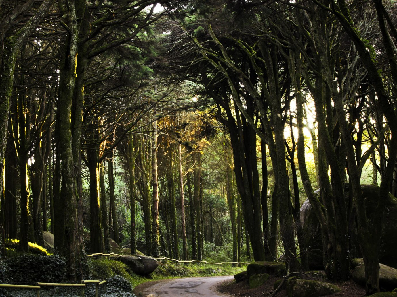 Lush forrest in Sintra, Portugal