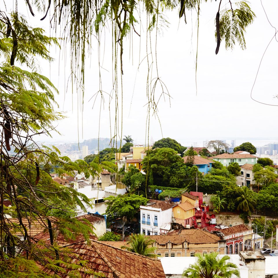 Beautiful view of Rio with hanging vines and more greenery