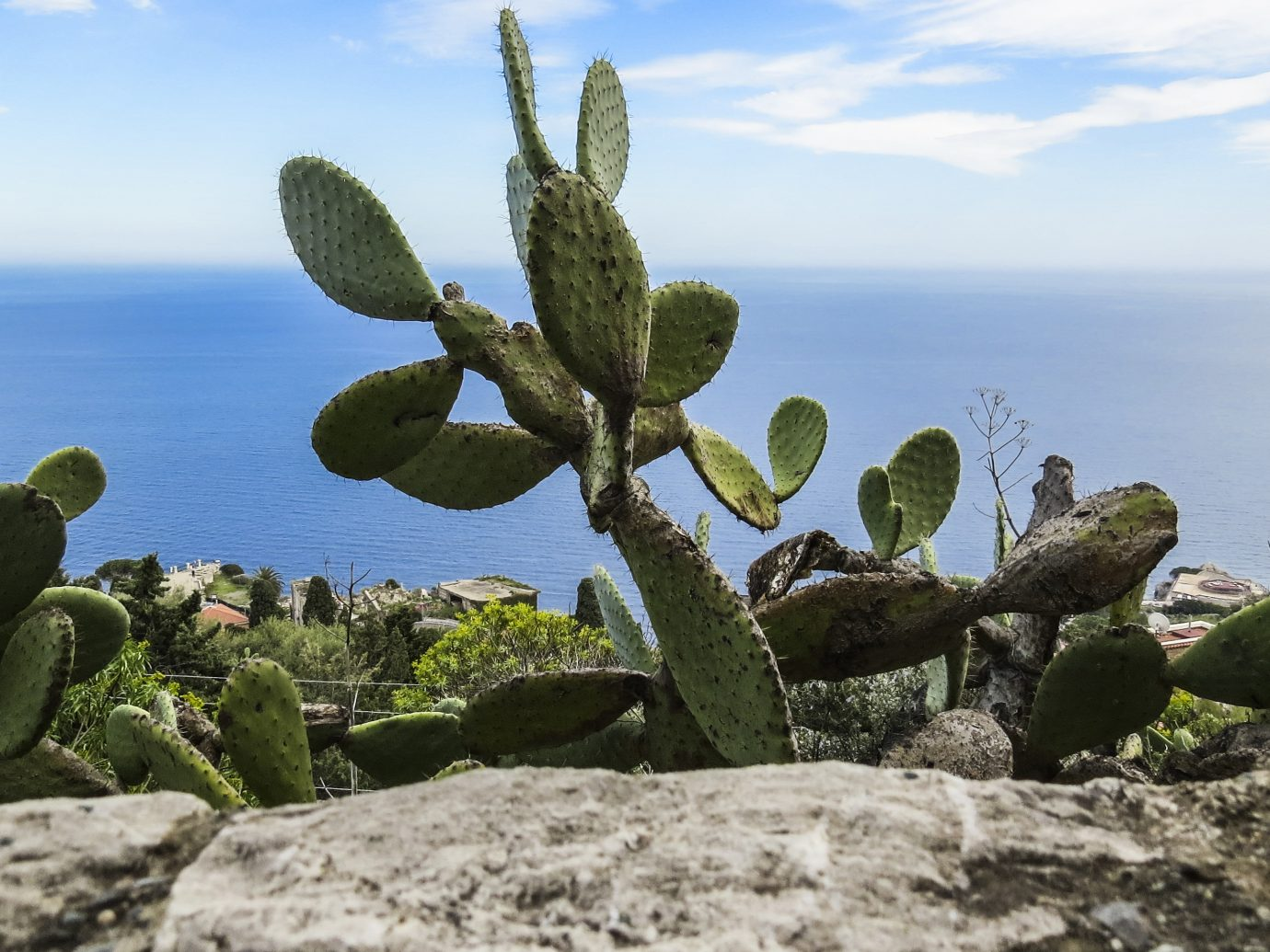 View of cactus and the sea of the coast from the city of Taormina, Sicily, Italy