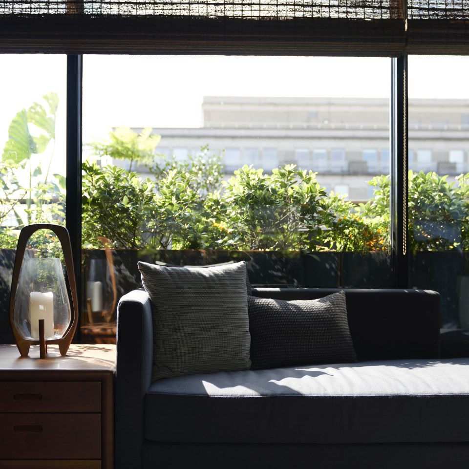 Blue couch against a window as the sun pours in with a view of a bush against the glass