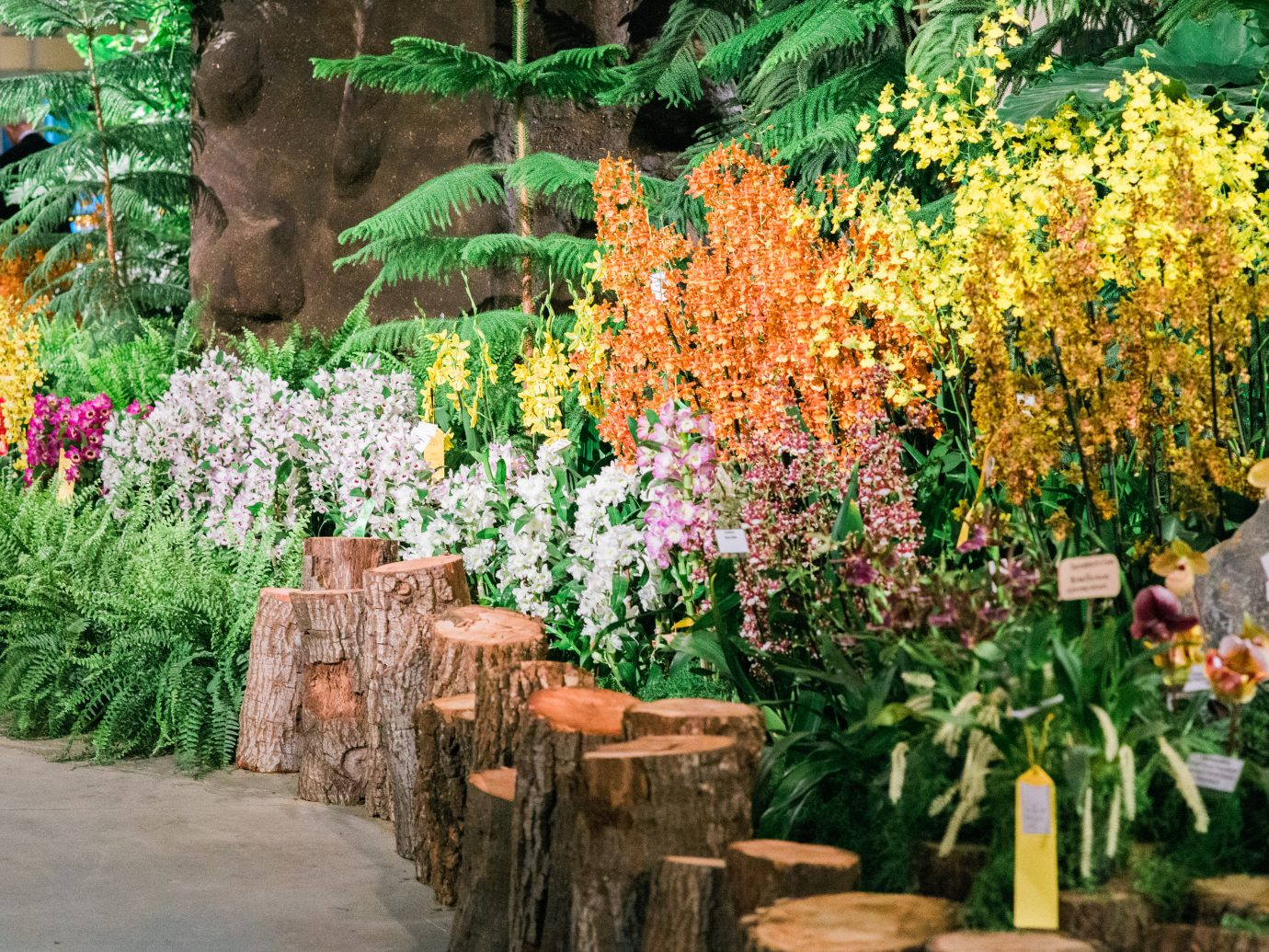 flower display at the International Orchid Show in Santa Barbara