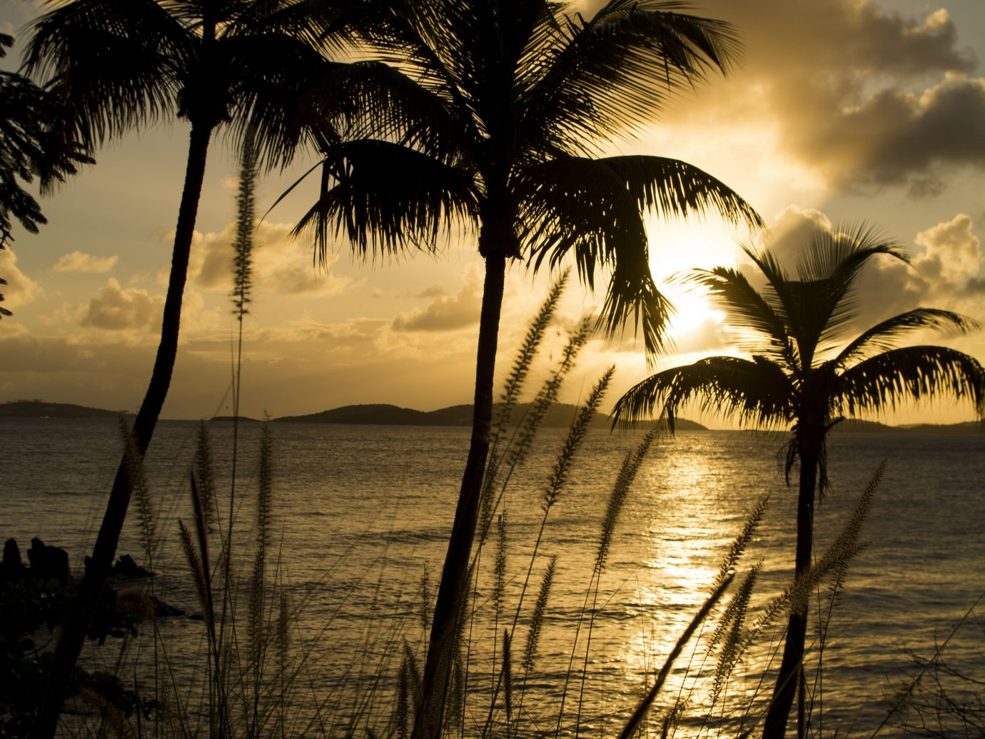 palm trees and ocean at dusk