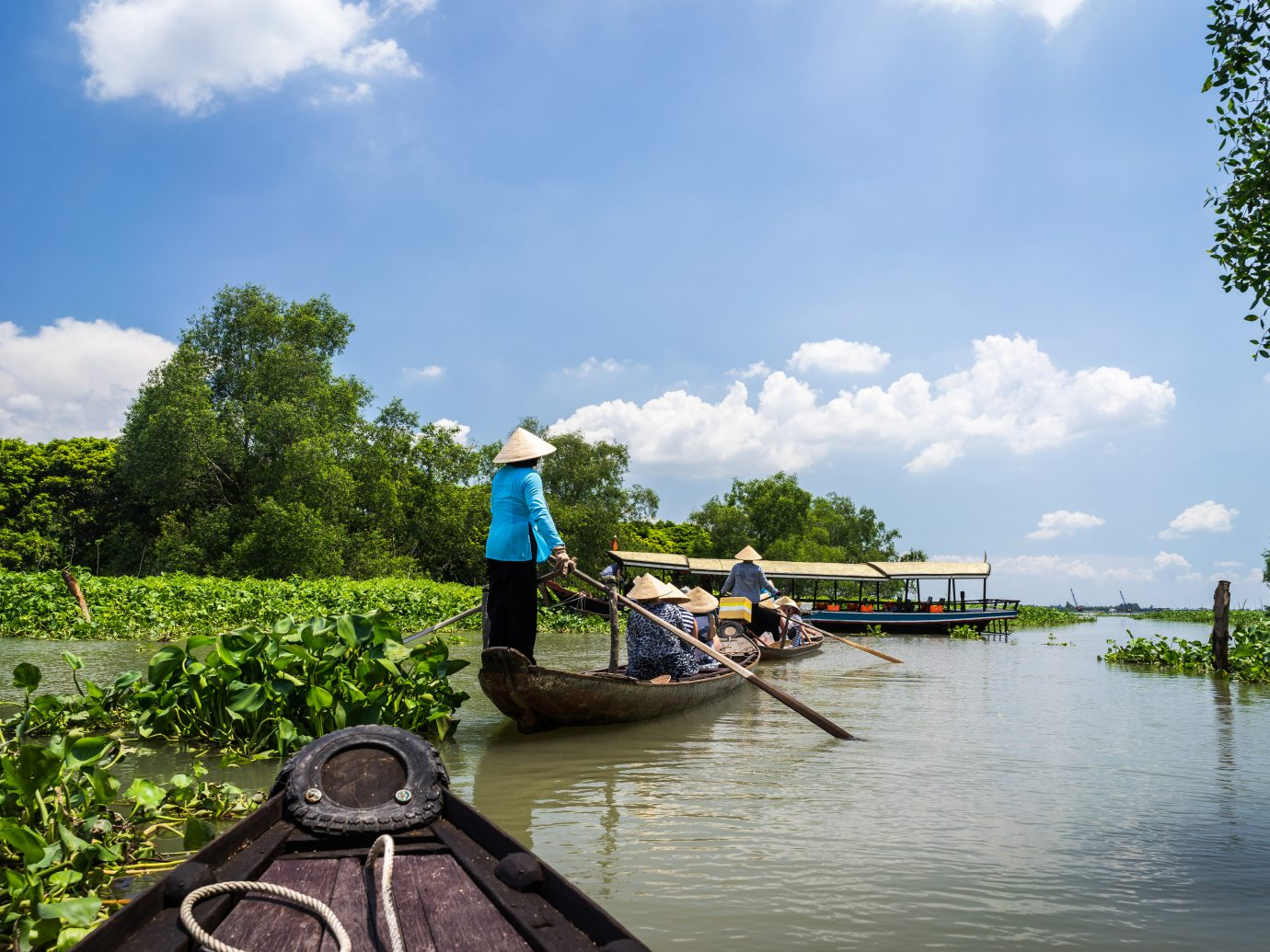 Tourism rowing boat in Tra Su flooded indigo plant forest in An Giang, Mekong delta, Vietnam.