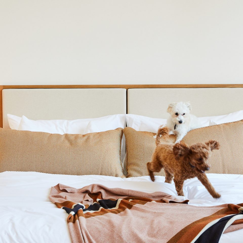 puppies running around on bed