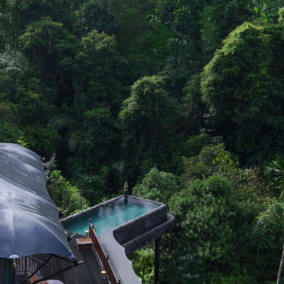 outdoor jungle with a pool jutting from a treehouse