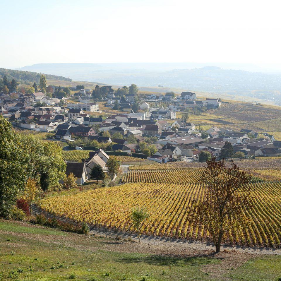exterior of vineyard