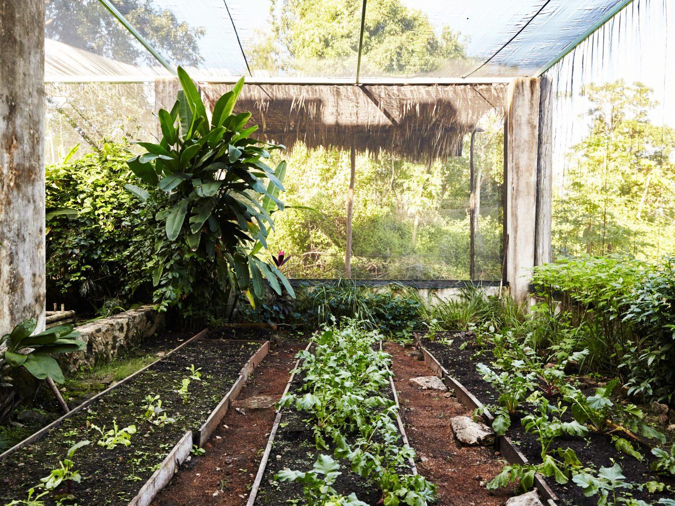 Plants growing at Coqui Coqui, Merida