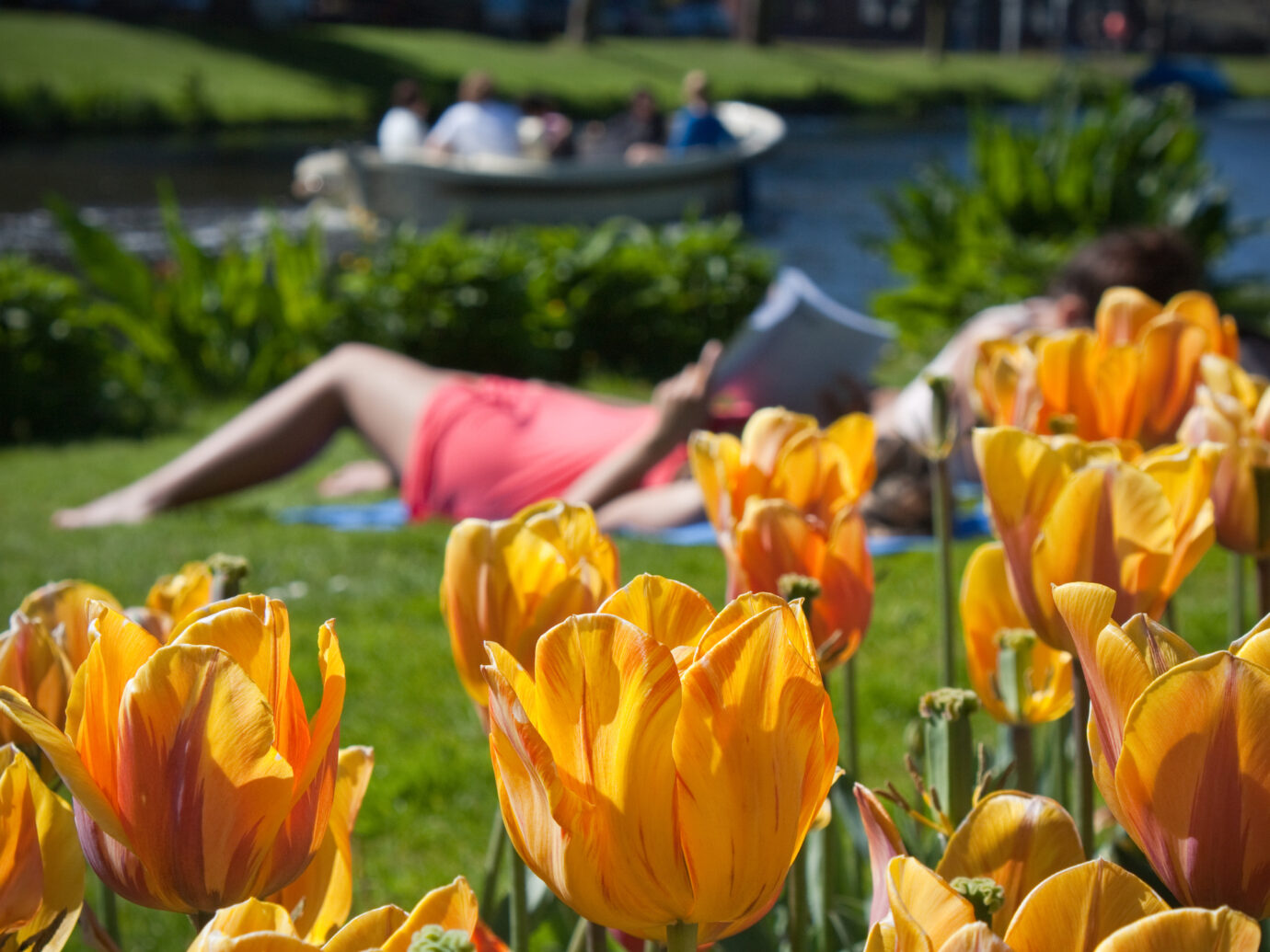"""Tulips in a park, boat and a girl reading a book.Springtime."""