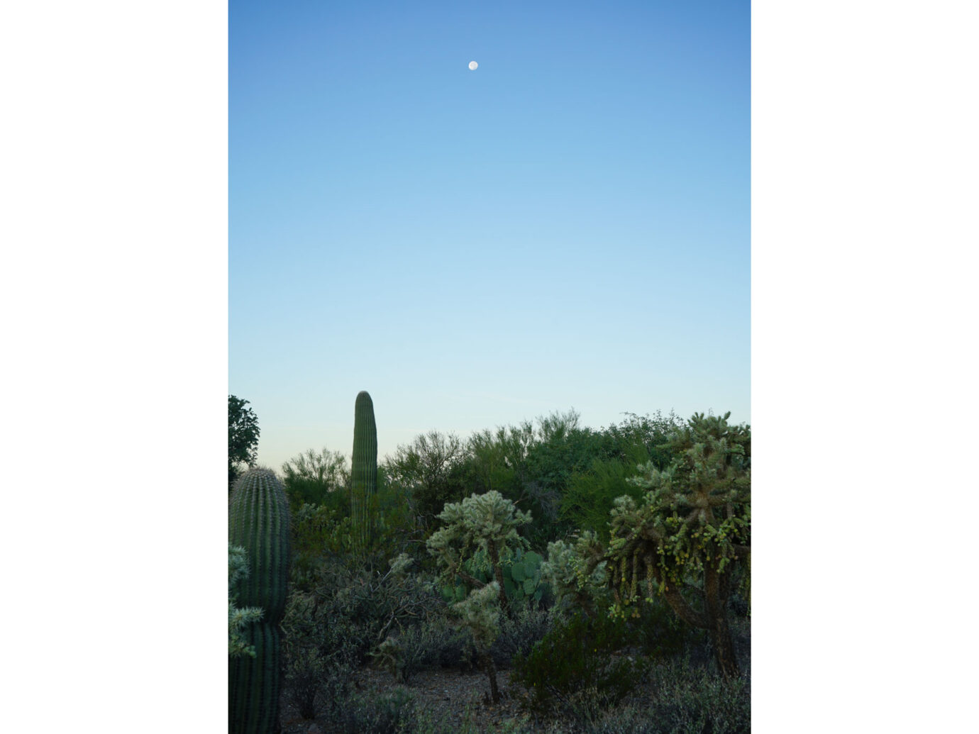 Gilbert Ray Campground, Tucson, AZ