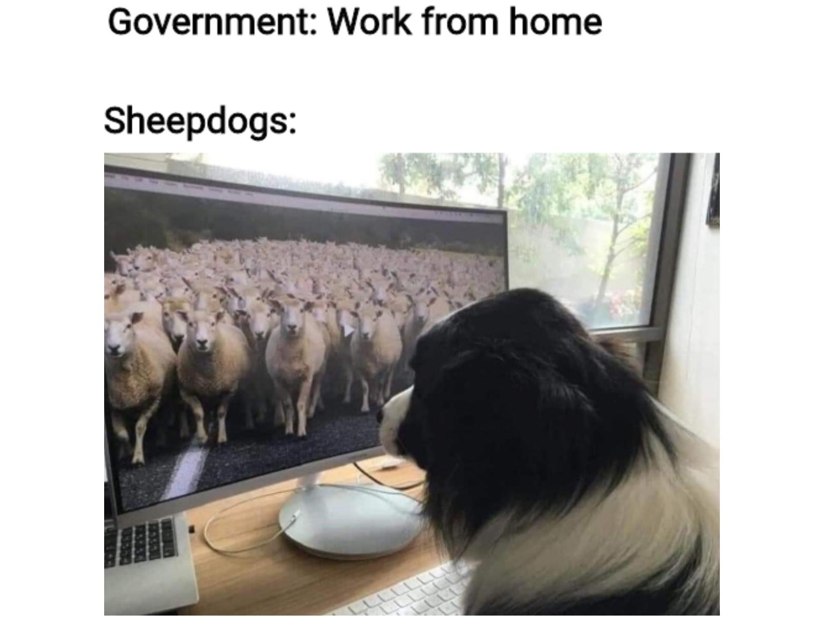 18 Quarantine Pet Memes We Can T Get Enough Of Jetsetter