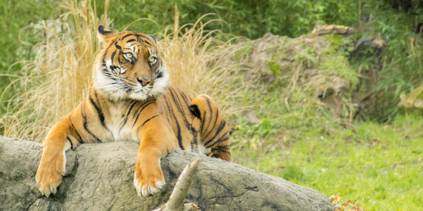 Tiger King - but make it fashion