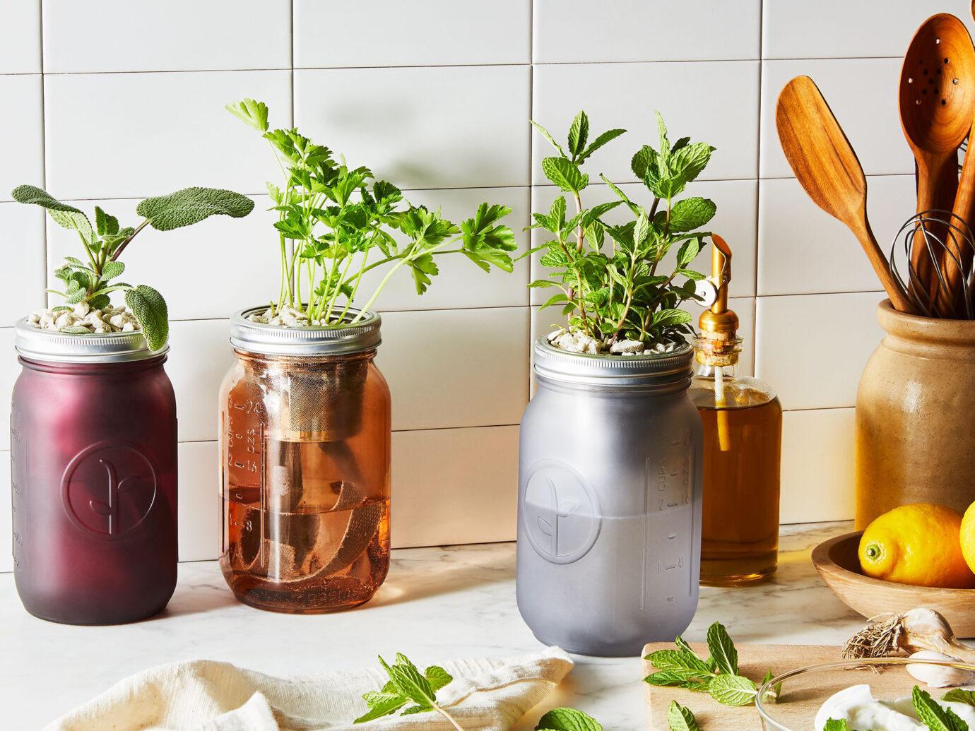Modern Sprout Garden Jar Herb Kit