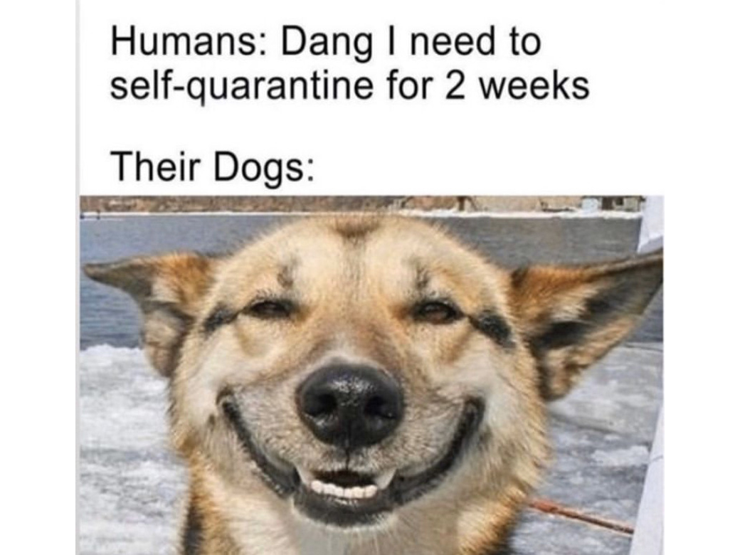 18 Quarantine Pet Memes We Can't Get Enough Of | Jetsetter