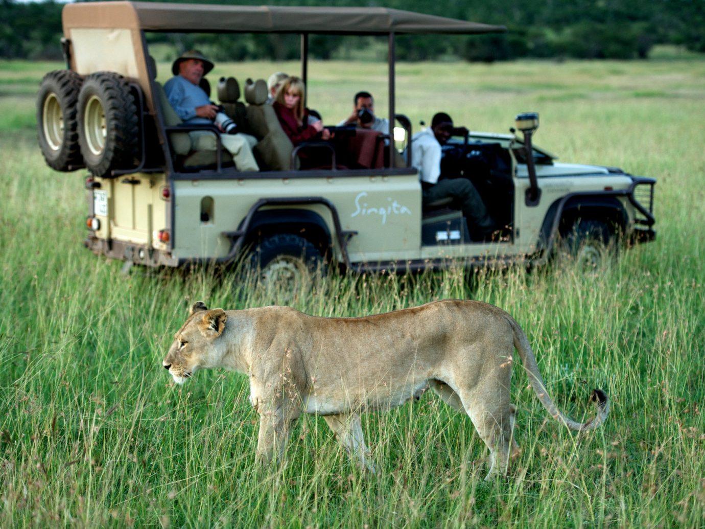 Outdoors + Adventure Travel Tips grass outdoor field mammal animal standing grassland Wildlife prairie Safari Adventure herd Farm