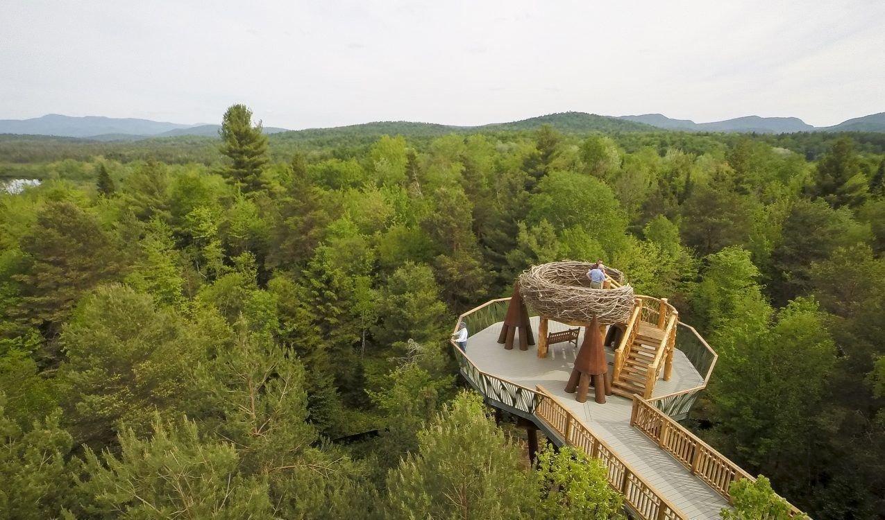 Trip Ideas tree outdoor wilderness ecosystem mountain Forest hill mountain range