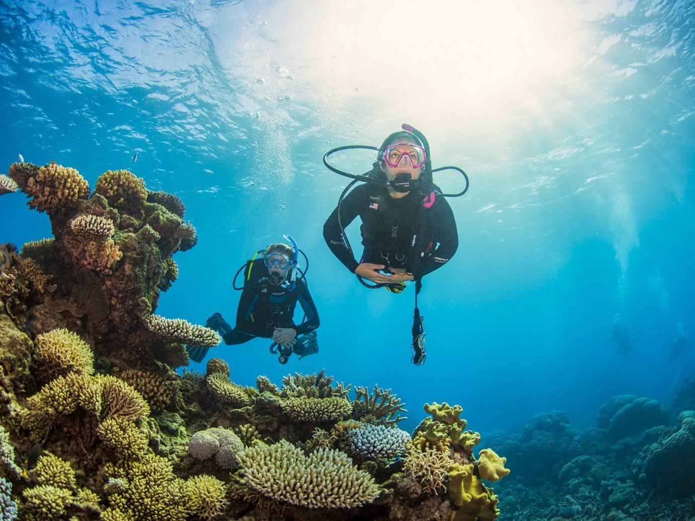 Health + Wellness Scuba Diving + Snorkeling Trip Ideas Scuba Diving marine biology underwater diving coral reef sports reef diving underwater biology water sport outdoor recreation recreation Sea swimming ocean floor