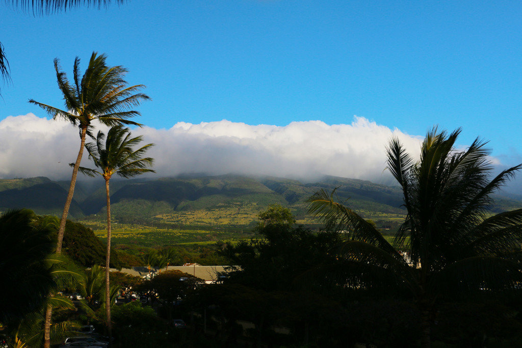 Trip Ideas tree sky outdoor mountainous landforms Nature plant geographical feature mountain cloud hill palm Coast arecales Sea woody plant morning landscape Ocean tropics rural area palm family sunlight Jungle lush hillside day