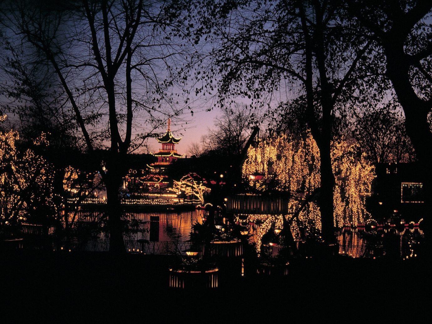 Trip Ideas tree outdoor night light evening darkness morning Sunset woody plant dusk lighting reflection autumn flower cityscape plant