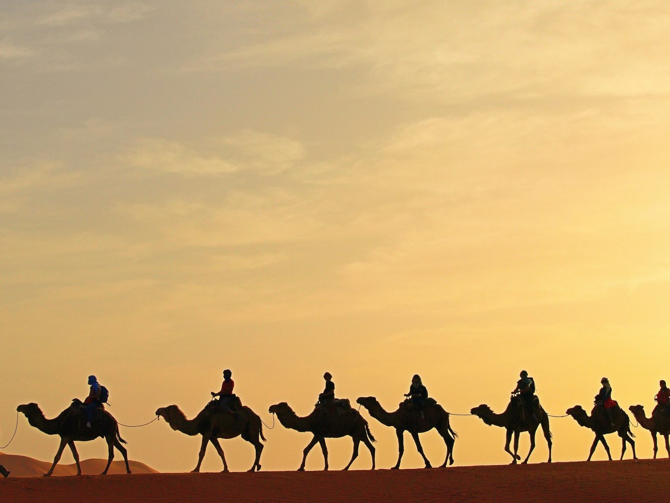 Hotels outdoor Camel natural environment people group Desert sahara camel like mammal landscape plain mustang horse steppe aeolian landform savanna prairie camel racing line horse