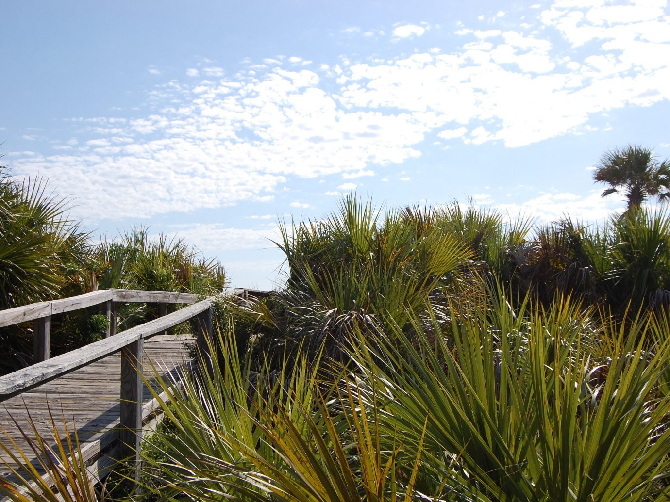 Beach East Coast USA Trip Ideas tree outdoor sky habitat Nature natural environment ecosystem flora grass botany plant arecales woody plant Coast grass family landscape palm family Sea Garden flower wetland