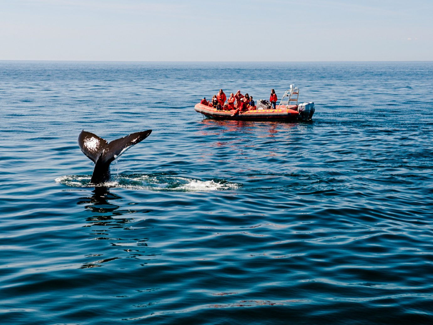 Trip Ideas water sky outdoor Boat Sea Ocean marine mammal whales dolphins and porpoises vehicle Coast boating aquatic mammal bay dolphin swimming