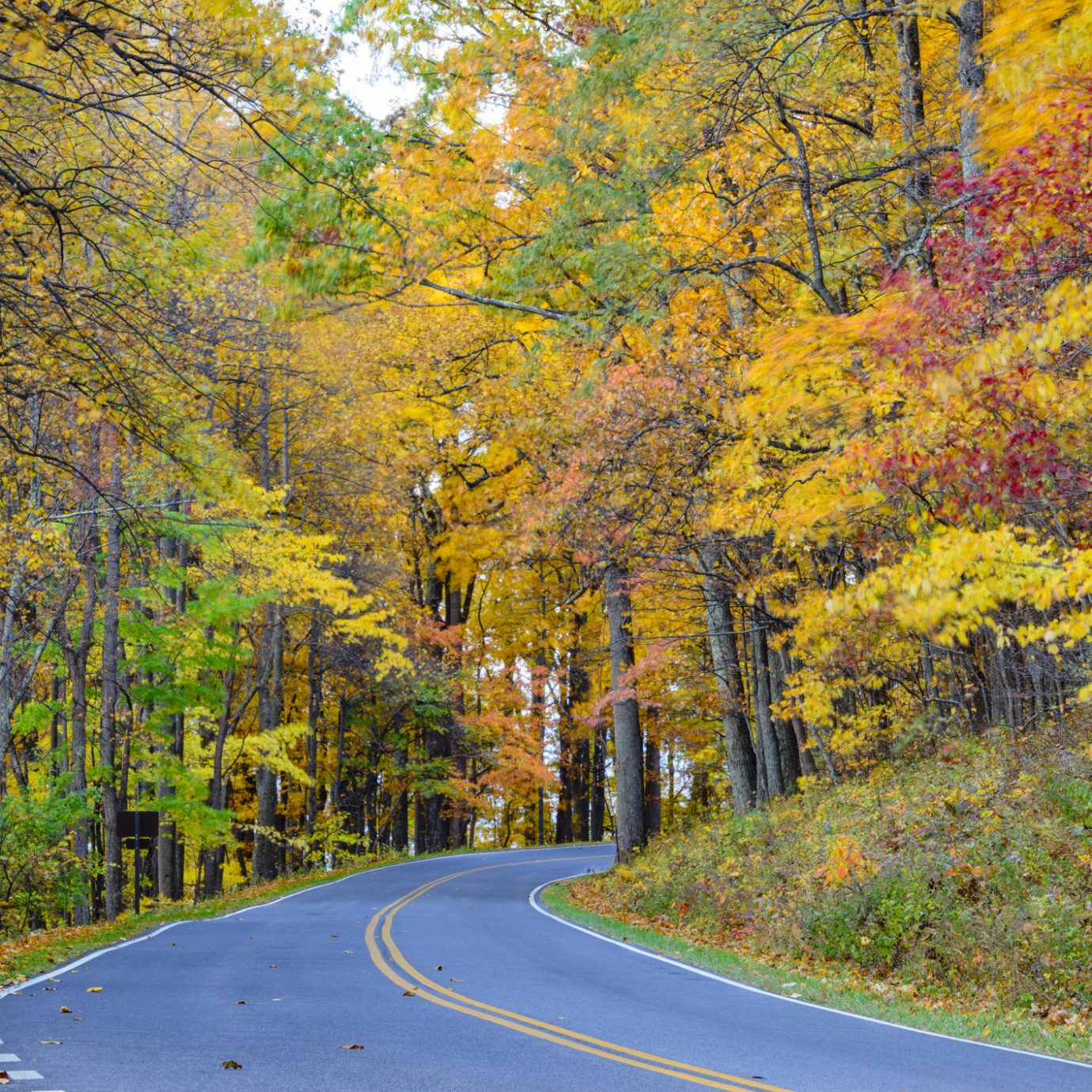 Outdoors + Adventure Road Trips Trip Ideas tree outdoor grass Nature leaf autumn yellow road woody plant deciduous path temperate broadleaf and mixed forest woodland Forest plant way biome landscape sunlight state park maple tree sky wooded traveling surrounded