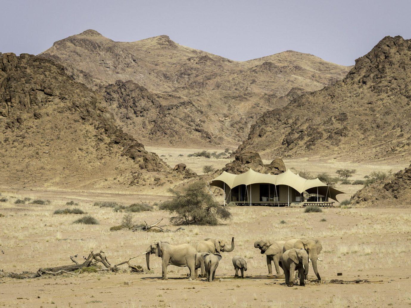 Spring Trips Trip Ideas outdoor mountain sky natural environment wilderness animal mammal wadi steppe Desert herd landscape aeolian landform plateau valley sand Camel Adventure sahara Safari dirt