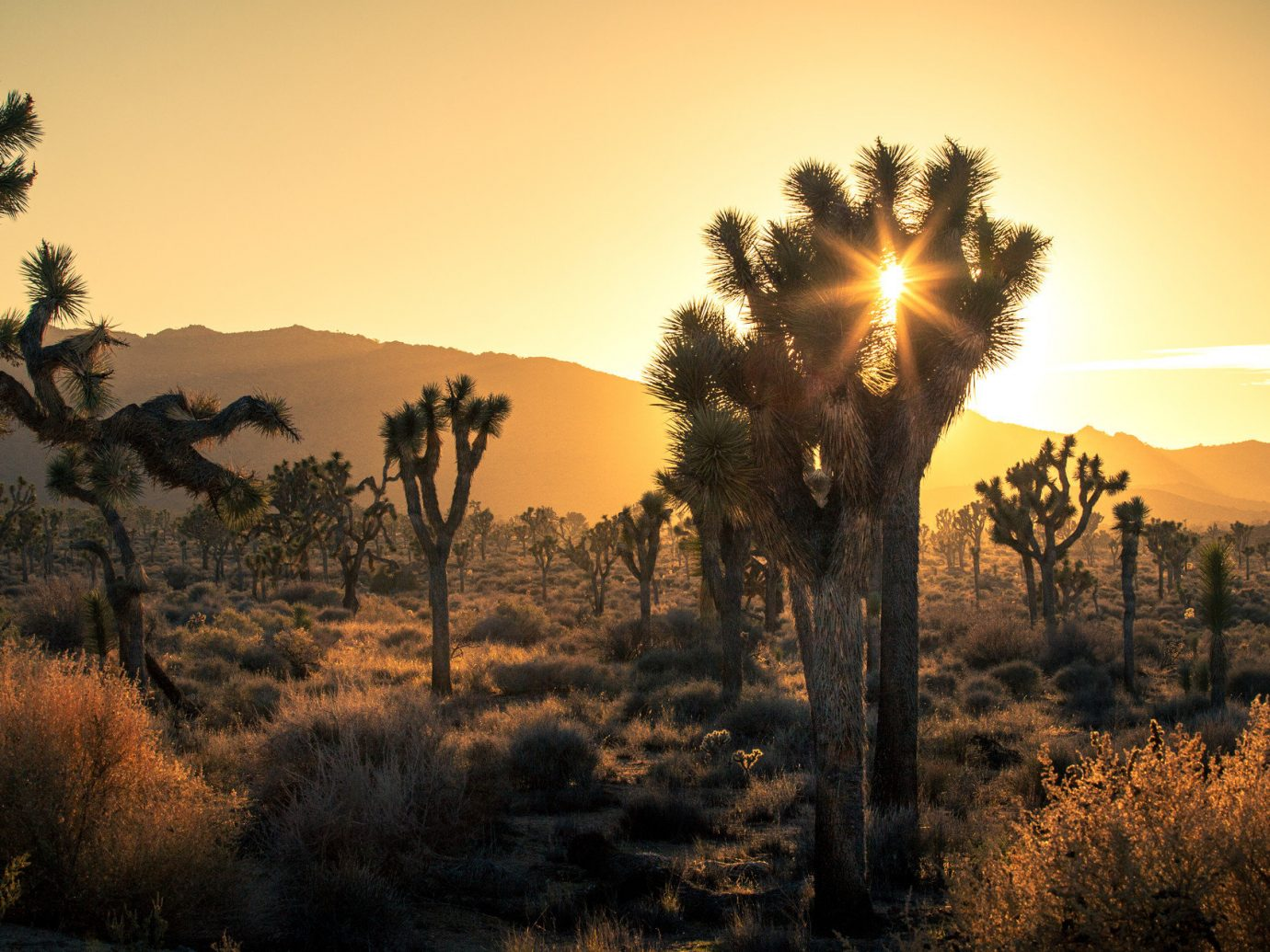 City Influencers + Tastemakers Joshua Tree Road Trips Travel Tips Trip Ideas outdoor sky tree grass plant Sunset Nature Sun atmospheric phenomenon sunrise wilderness natural environment horizon morning dawn evening setting savanna sunlight season dusk field landscape woody plant autumn flower arecales Desert