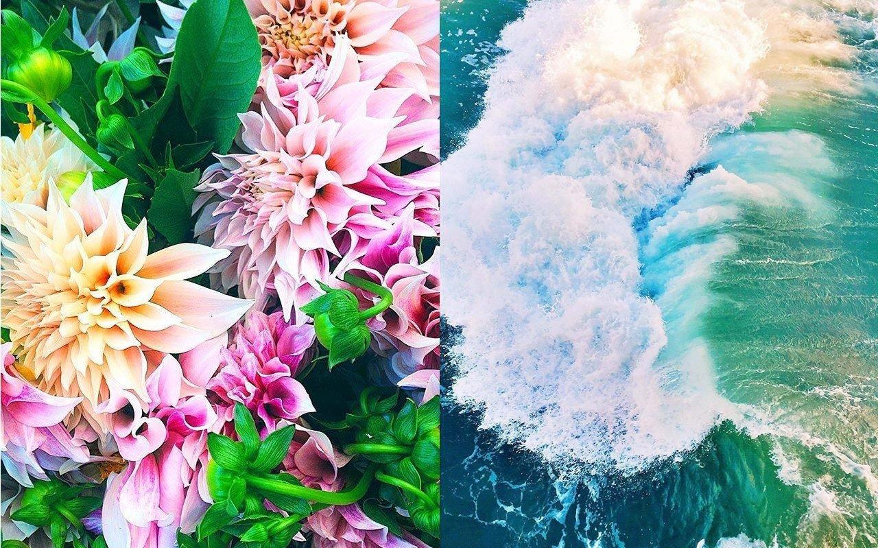 Travel Tips flower flora plant land plant petal bouquet floristry flowering plant flower bouquet colored
