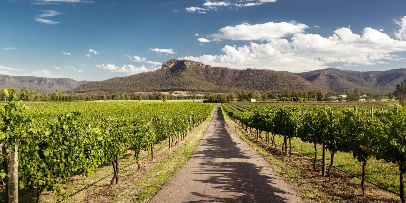 Trip Ideas agriculture sky Vineyard cloud tree mountain road field landscape hill plantation mount scenery