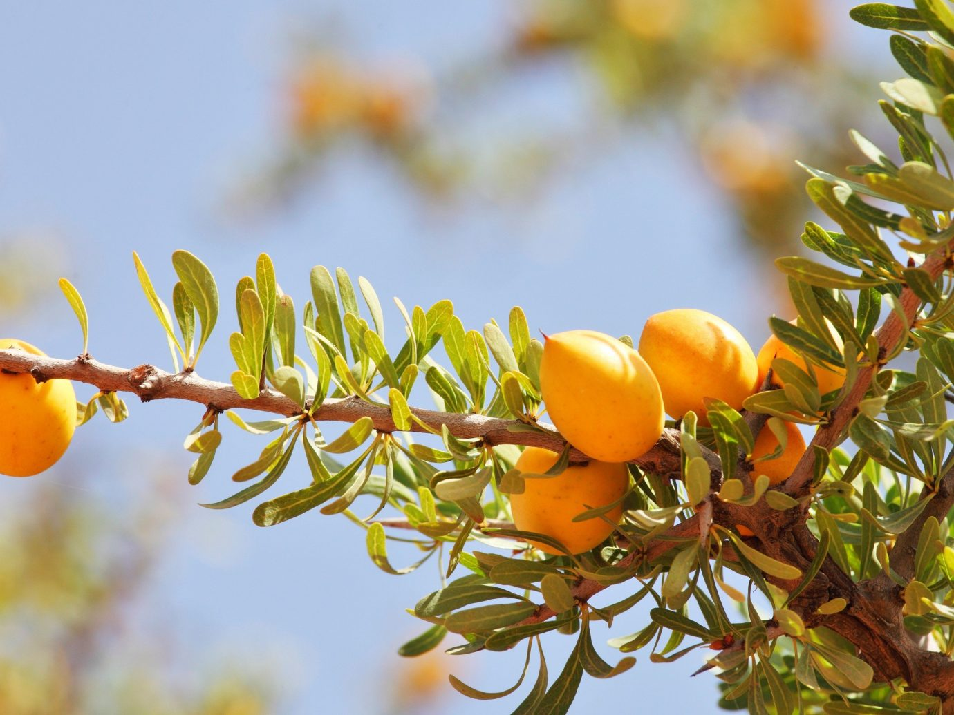 Style + Design tree Nature flora plant branch fruit outdoor flower yellow produce botany food leaf orange season land plant woody plant citrus autumn macro photography rose hip flowering plant blossom shrub sunlight evergreen