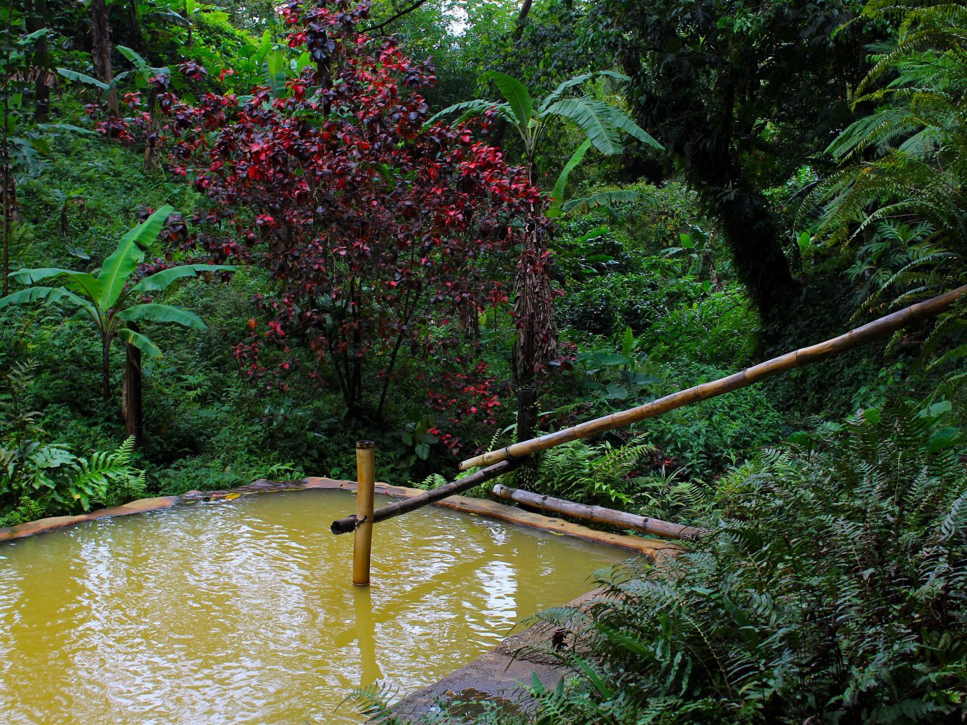 Trip Ideas tree outdoor water habitat River Nature geographical feature natural environment wilderness bayou rainforest ecosystem Forest Jungle stream old growth forest woodland leaf Lake wetland waterway autumn bridge flower pond surrounded wooded