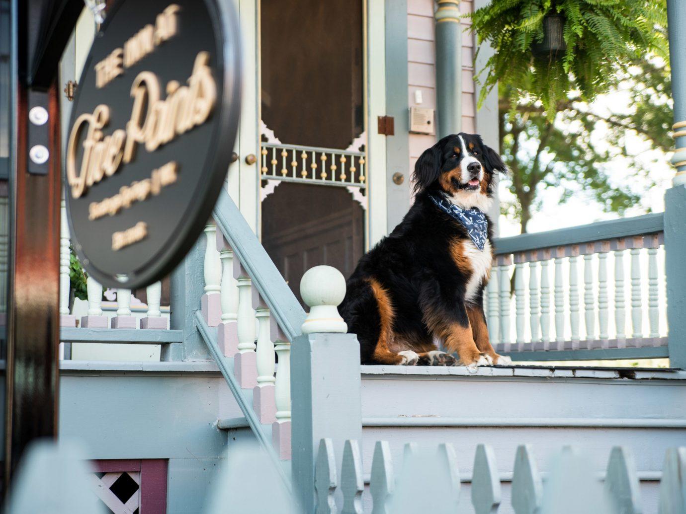 Girls Getaways Trip Ideas Weekend Getaways Dog dog like mammal