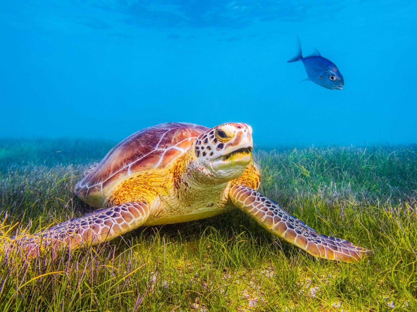 Mexico Trip Ideas Weekend Getaways sea turtle turtle ecosystem loggerhead marine biology underwater organism reptile tortoise terrestrial animal emydidae fish leatherback turtle