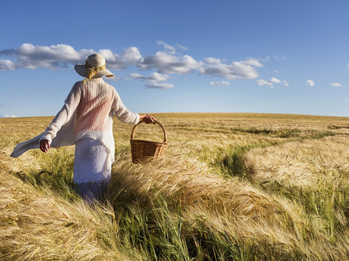 Offbeat grass sky outdoor agriculture grassland field prairie natural environment ecosystem steppe grass family horizon crop plant wheat rural area meadow landscape harvest flowering plant food grain food outdoor object highland