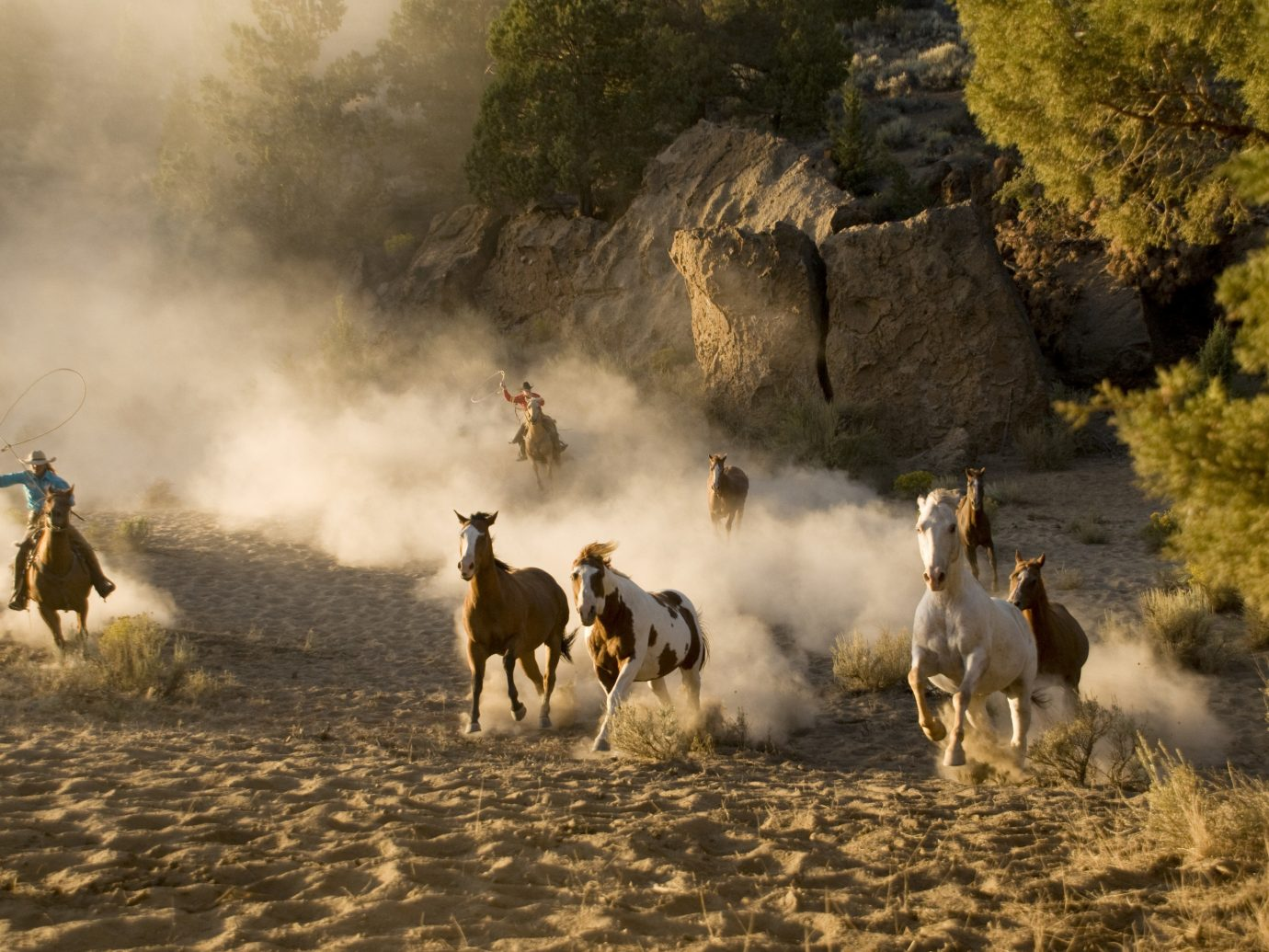 Trip Ideas outdoor grass herd natural environment group mustang horse mammal screenshot
