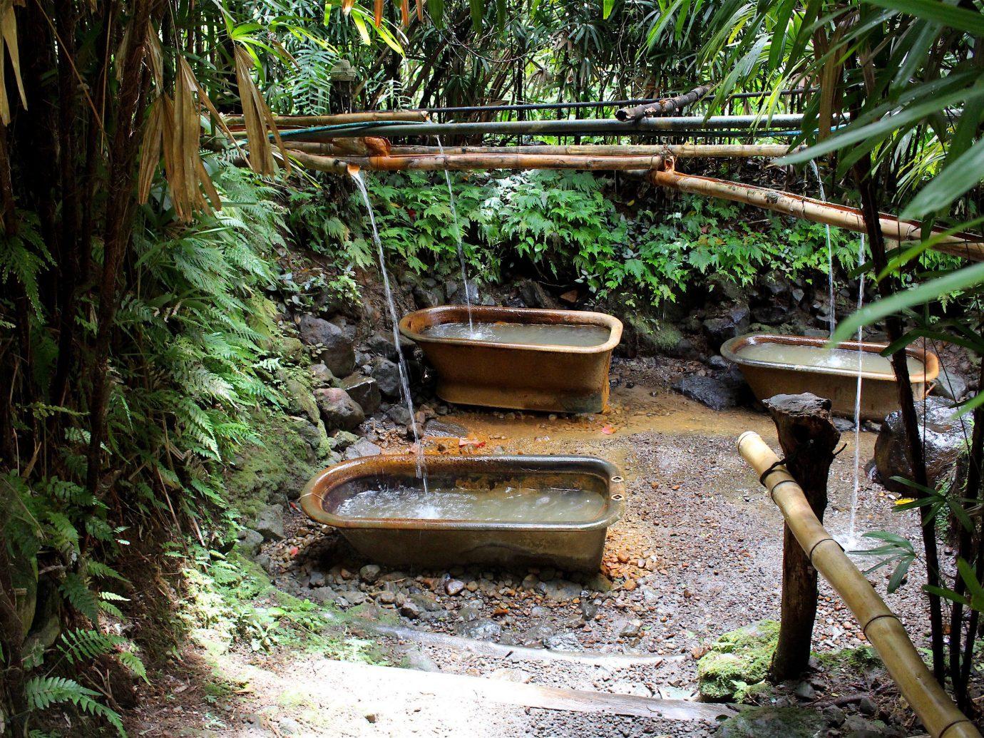 Trip Ideas tree outdoor ground habitat natural environment plant Forest rainforest Jungle woodland Garden stream old bushes dirt stone