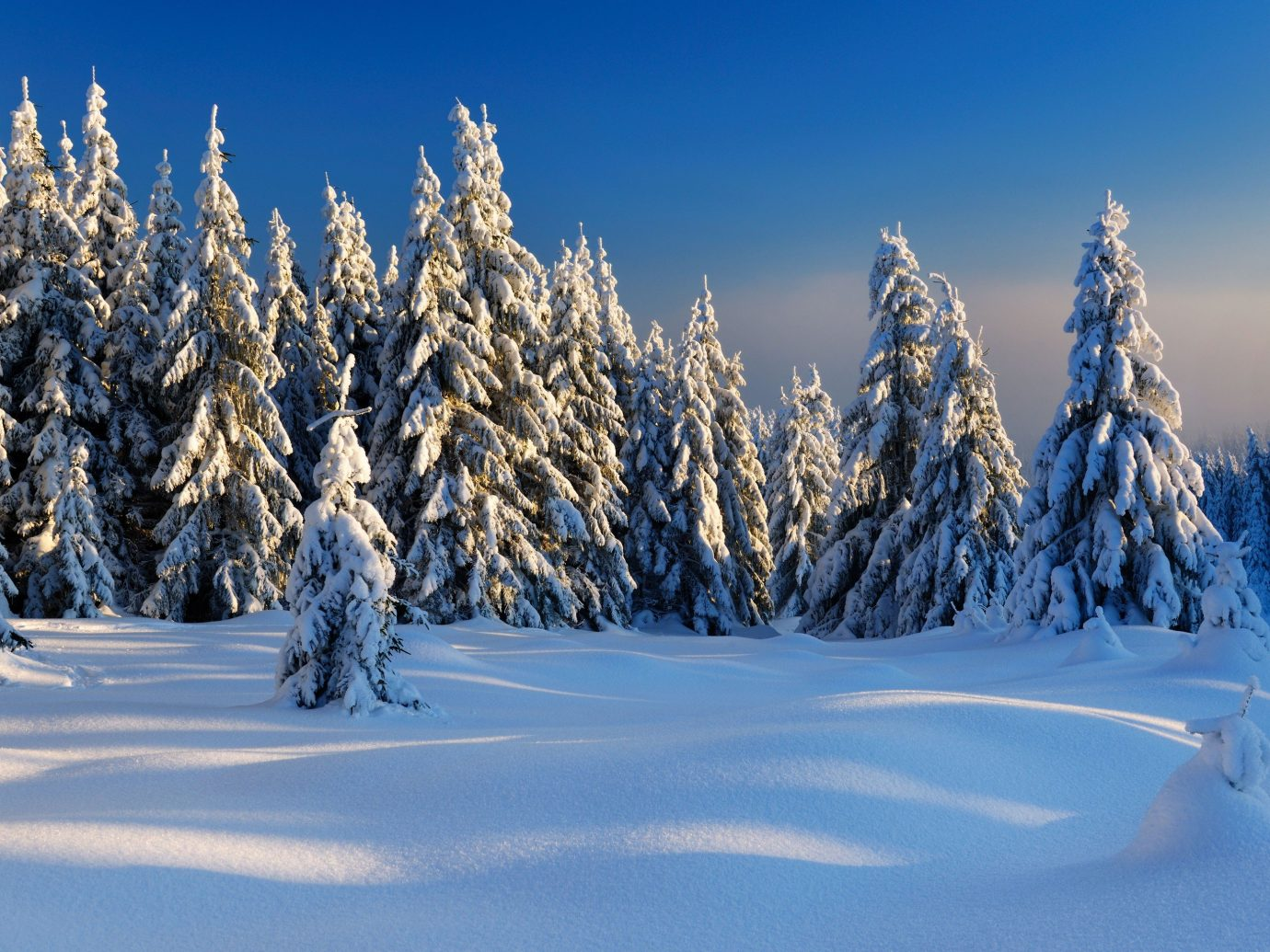 Trip Ideas snow outdoor tree sky skiing Winter Nature weather season plant slope mountain woody plant freezing fir spruce mountain range larch frost branch piste