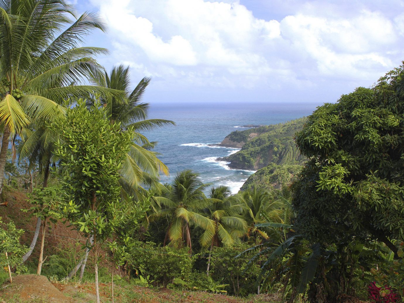 Health + Wellness Trip Ideas tree outdoor sky vegetation geographical feature plant body of water Coast Sea tropics Forest Nature Jungle arecales rainforest Beach cliff bay terrain palm lush
