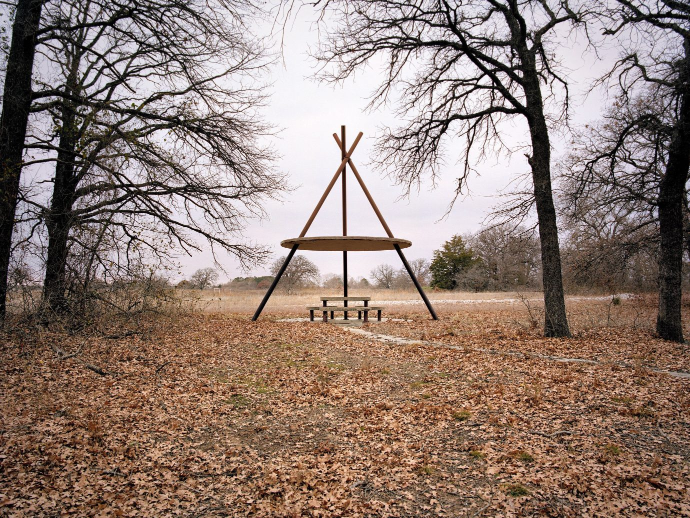 Arts + Culture tree outdoor ground habitat Nature natural environment woodland Forest Winter season morning dry woody plant sunlight leaf rural area autumn dirt wooded distance