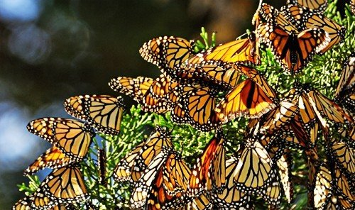 Outdoors + Adventure Scuba Diving + Snorkeling butterfly monarch butterfly moths and butterflies insect fauna invertebrate Jungle pollinator arthropod window plant